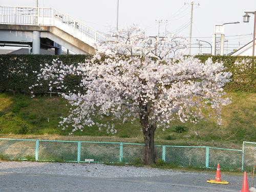 train photo (36)