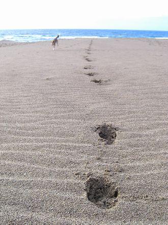 風紋に残す足跡