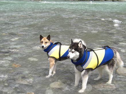 泳ぐのは無理っ!