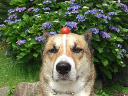 なんで頭にミニトマトなん