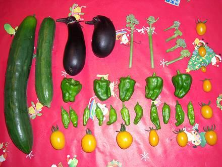 8月3日の収穫