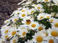 Flower0802602