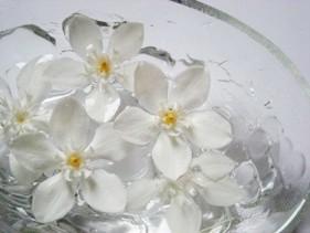 coco-Wrightia antidysenteria2
