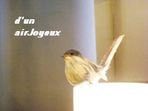 cafe-bird2