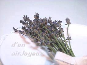 coco-Lavender1