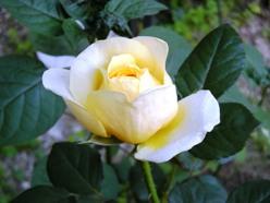 coco.garden_JehanneDarc2