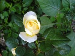 coco.garden_JehanneDarc