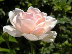 coco_garden_MadamFigaro2