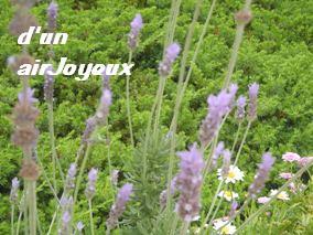 cocogarden08.Lavender3