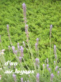 cocogarden08.Lavender5