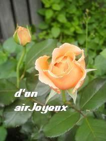 cocogarden-JustJoey1