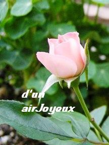 coco.garden.rose12