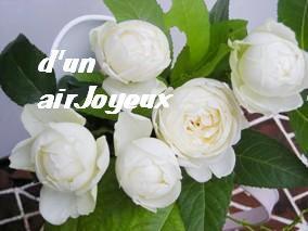 obatyama_gardenrose