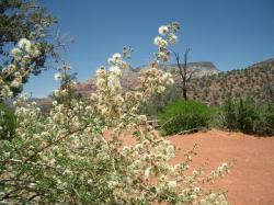 赤土と白花