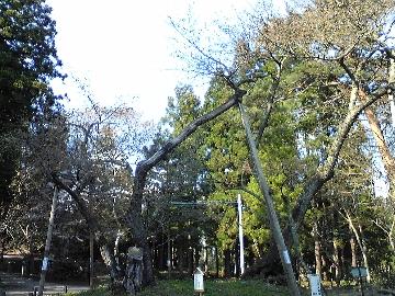 20080428_5.jpg