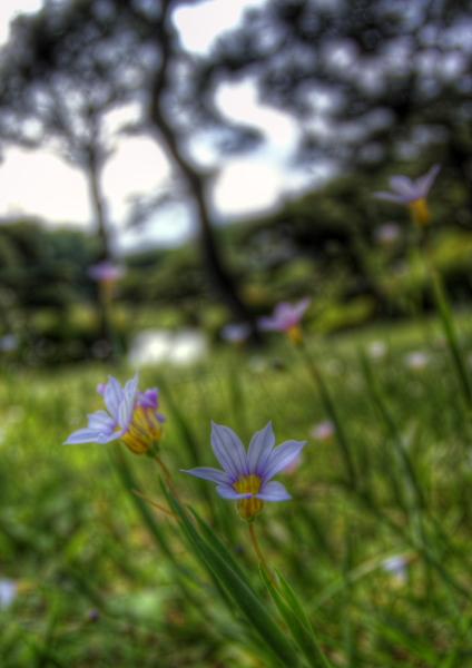 2008年5月-小石川植物園-5