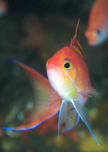 2008-08-01-ナガハナダイ02