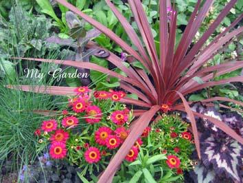 My Garden-2
