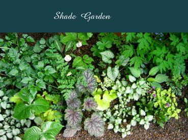 Shade Garden2