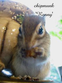 Renny.jpg
