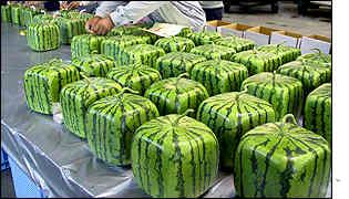 _1390088_watermelons300ap.jpg