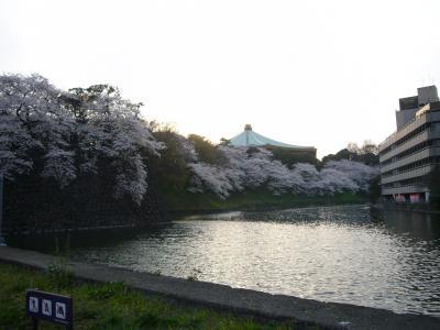 江戸城 桜