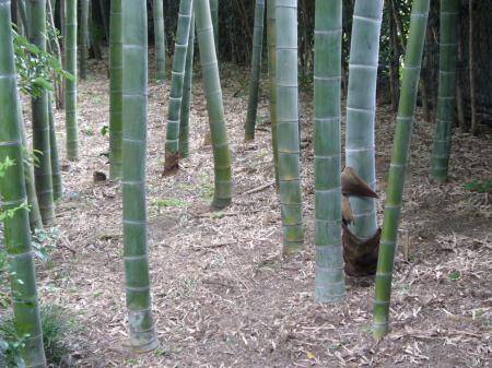 太田黒公園 竹