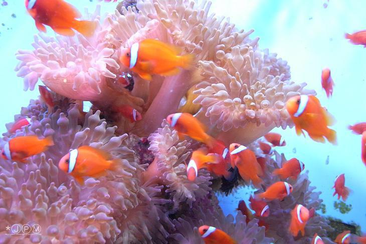 美ら海ポップコーン