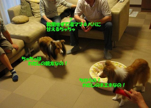 20080622_0018s-.jpg