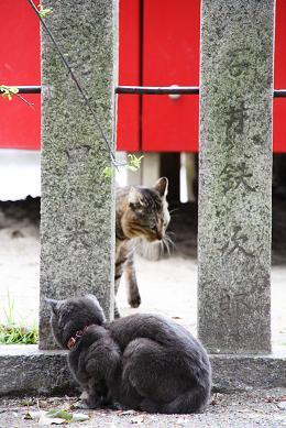 神社の猫3