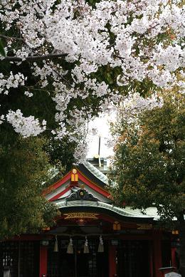 十三の桜 156