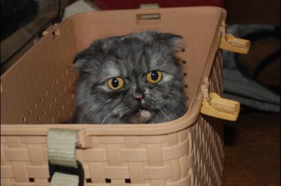 猫レイヤかあさん