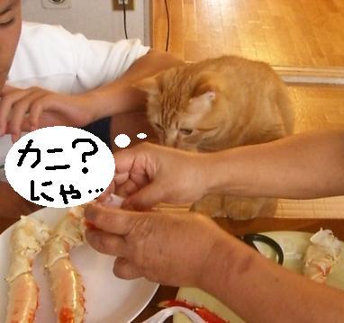 かに!カニ!蟹!