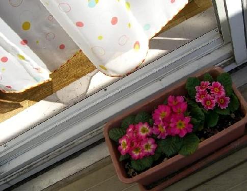 お気に入りのカーテンとお花★*