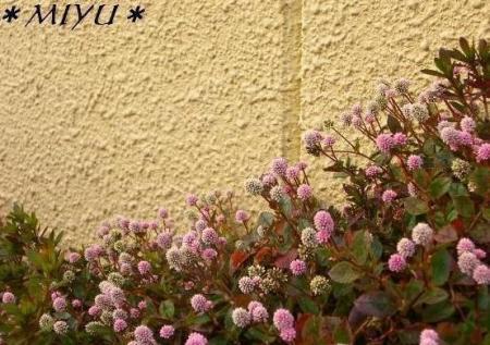 小さなお花*