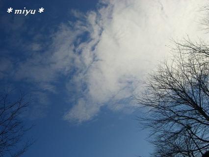 細い木々と雲.。.:*・゜
