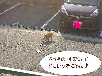 三毛猫ちゃん追いかけてるのね♪