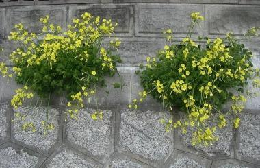 黄色のお花NO,2*