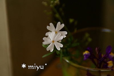 帰り道の花摘み.:*・゚☆.。.:*