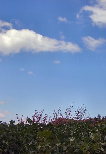 向こう側に桜☆.。.:*
