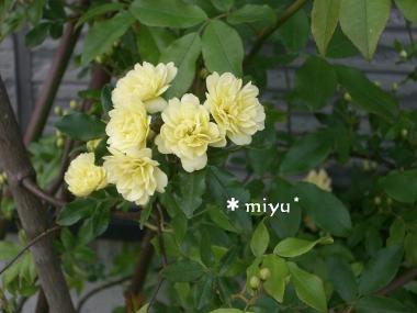 黄色のお花 UP♪*
