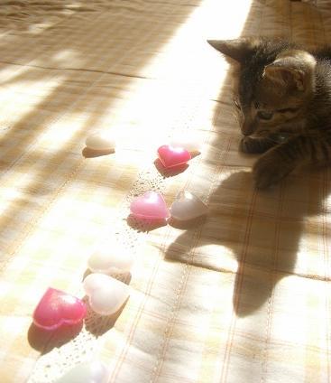 日向ぼっこ.:*・゚☆.。.:*♪