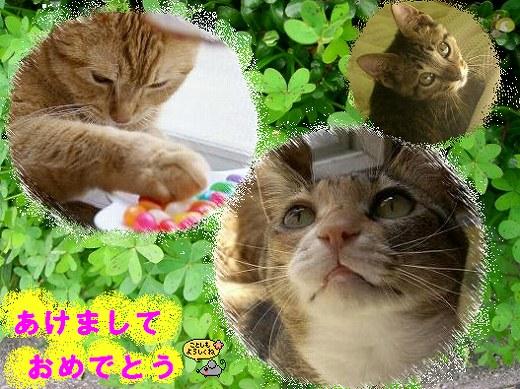 我が家のネコたち♪*