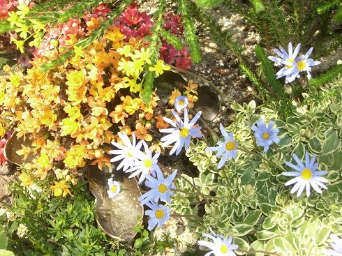 仕事場の近くで咲いてたお花*