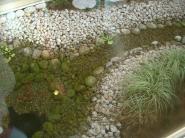 とあるクリニックの中庭。猫といえば金魚?
