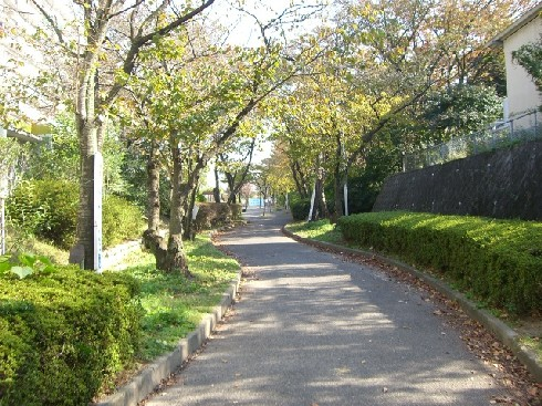 遊歩道.。.:*・゜゚・*