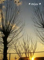 枝がいっぱいの木*