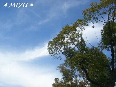 神宮の空はこんな感じ*