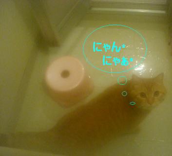 お風呂にて*:・'゚☆