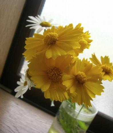 実家の花。o.゚。*・